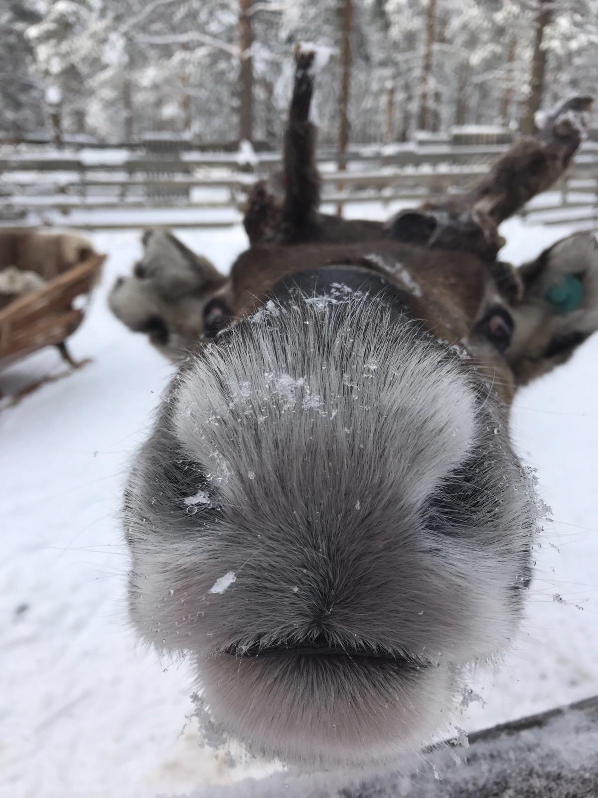 Bedrijfsuitje Lapland 1