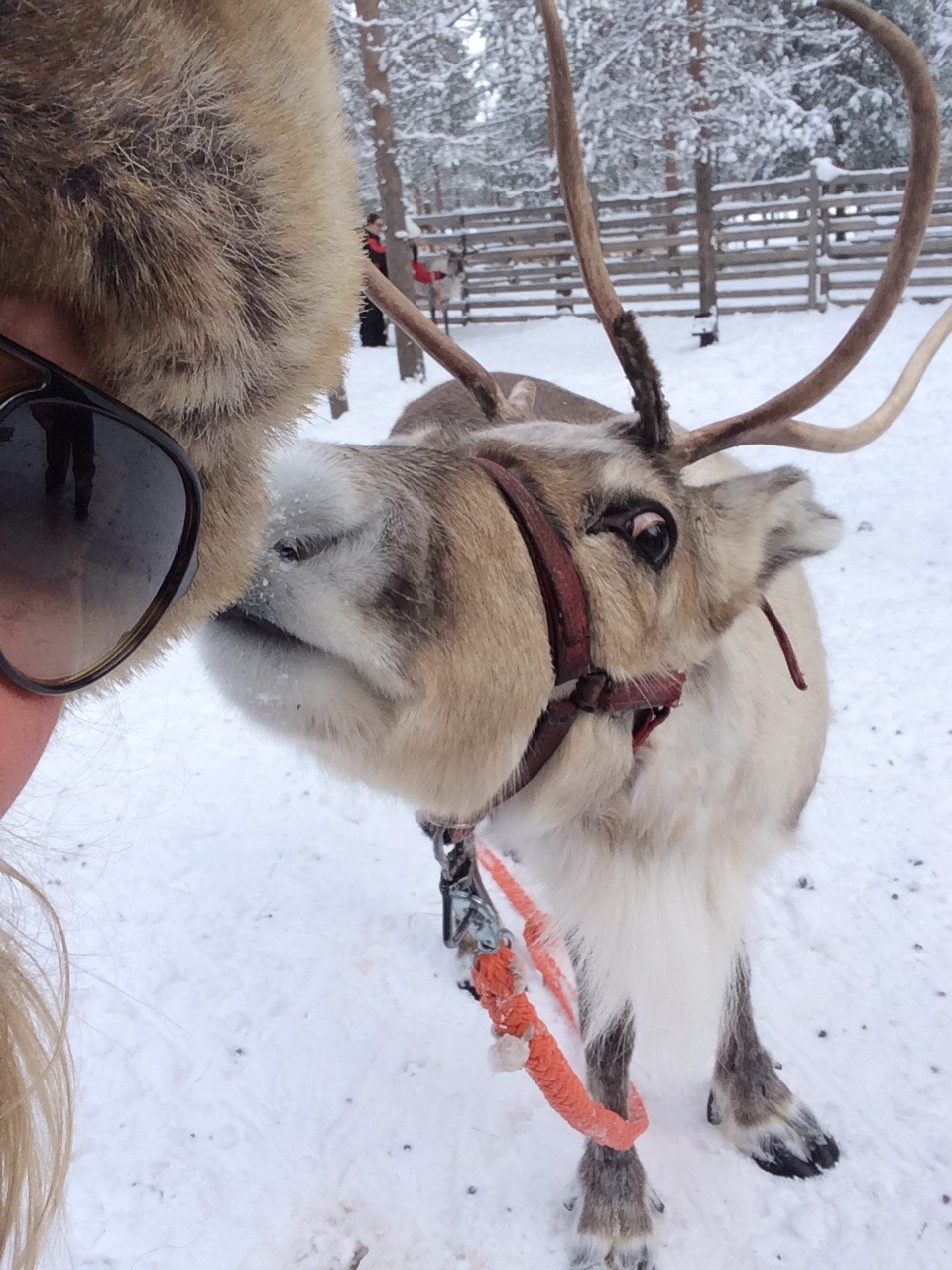 Bedrijfsuitje Lapland 7