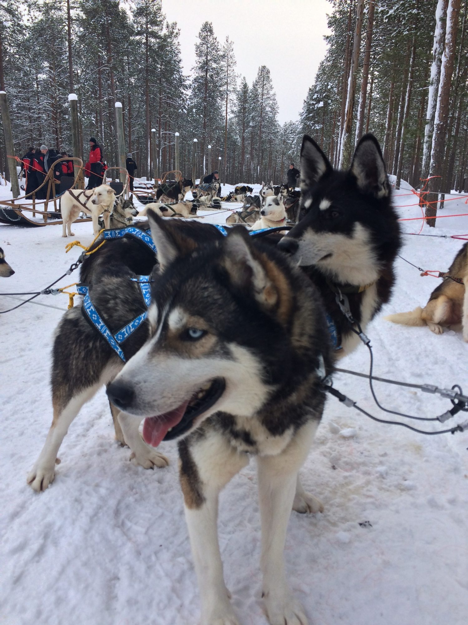 Bedrijfsuitje Lapland 16